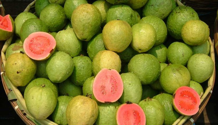 guava fruit Nutrition facts and information for guavas, common, raw.